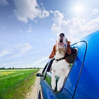 assurance automobile en ligne